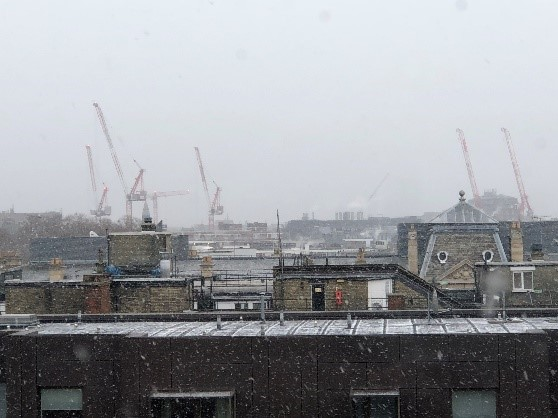 Cranes in the Snow - © Shirley Radford 2018