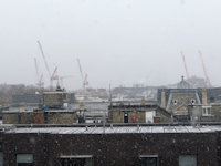 Cranes in the Snow (c) Shirley Radford 2018
